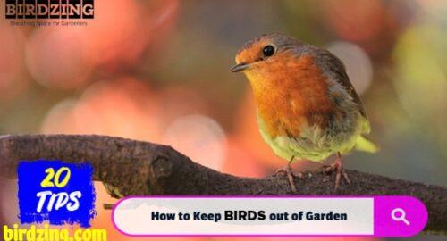 how to keep birds away from garden