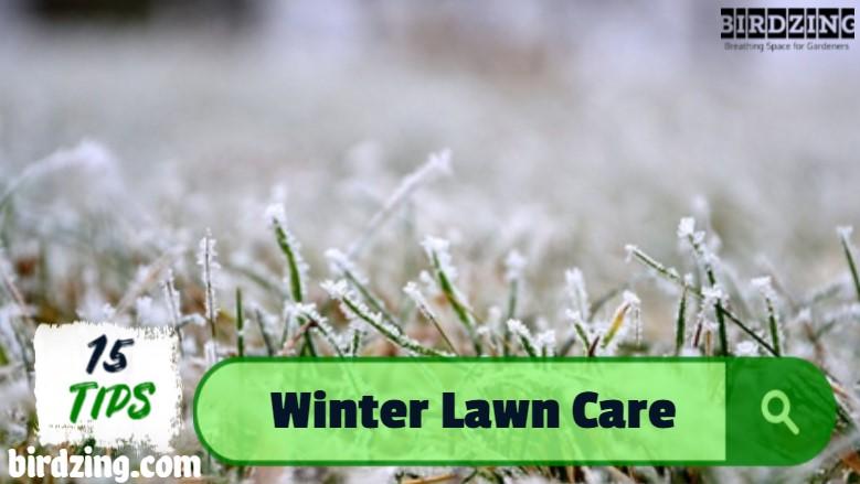 best winter lawn fertilizer