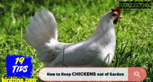 how to keep chickens out of my yard