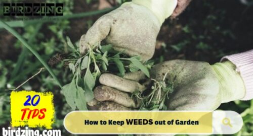how to keep weeds out of vegetable garden