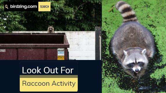 Raccoon Activity in Garden